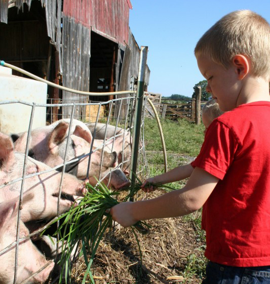 kids with pigs